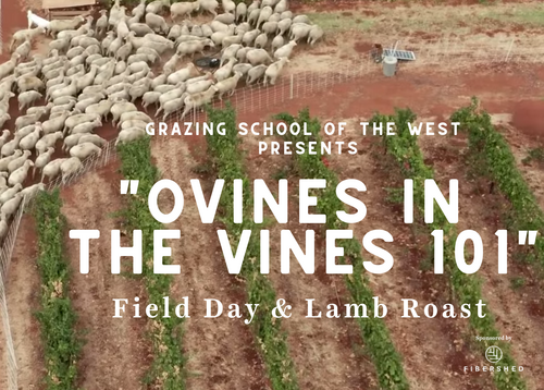 Ovines In The Vines 101 Eventbrite Banner V22