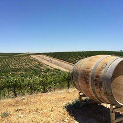 On the Vine barrel