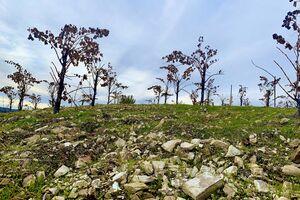 Tablas Creek Limestone Soils In Dry Farmed Grenache
