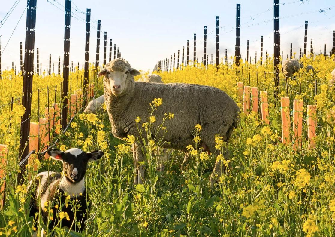 Meet the Wooly Weeders Food Wine