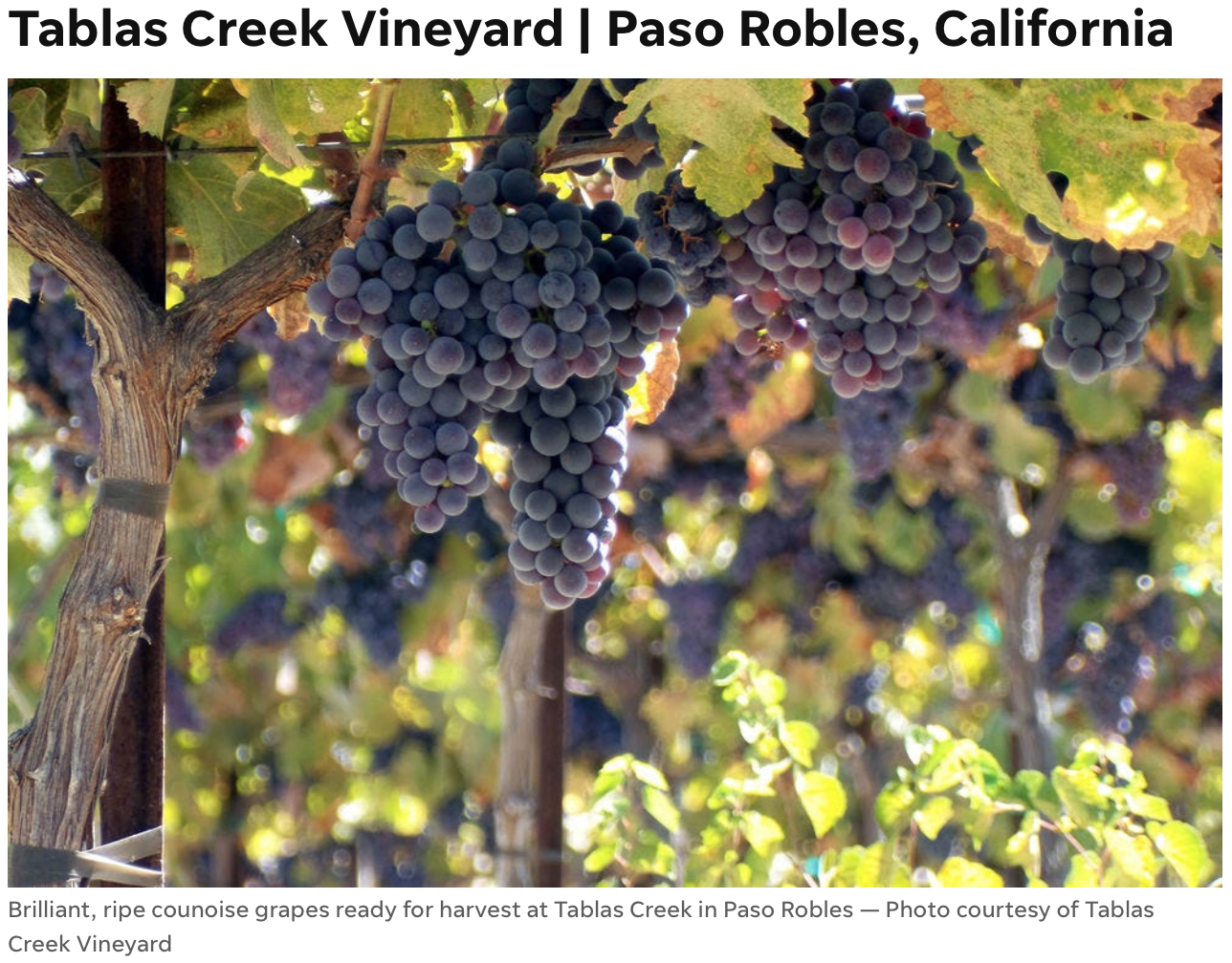 Usa Today 10 Best Sustainable Wineries