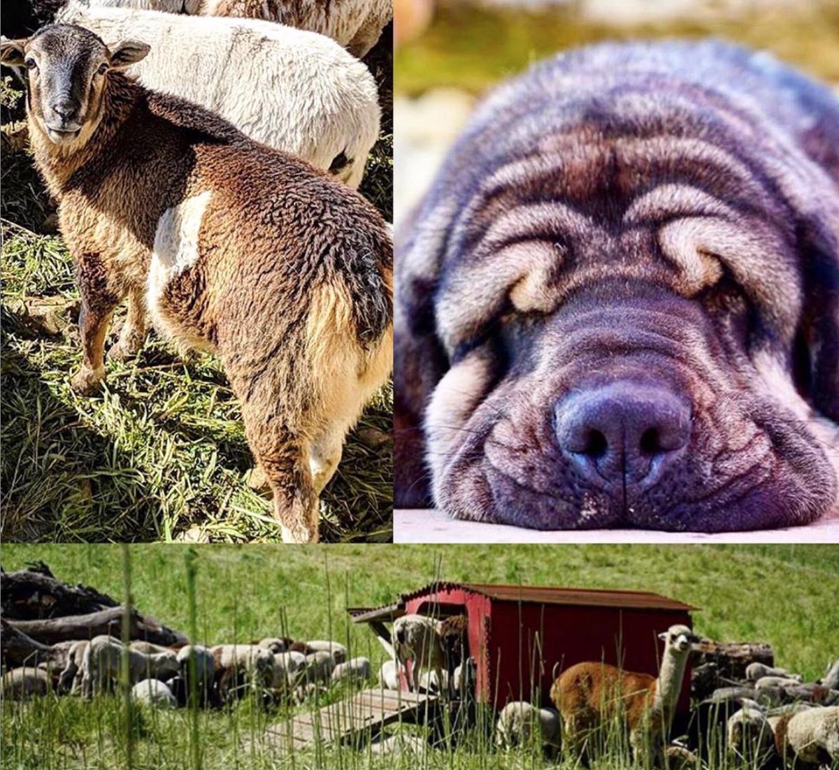 Winemakers Podcast Animals