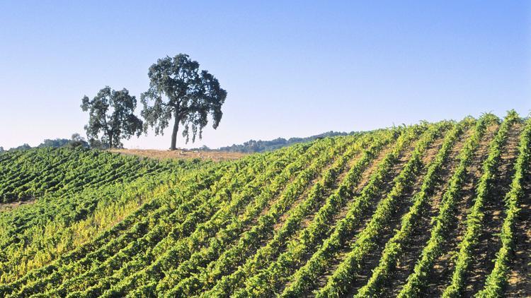 Ct Wine Paso Robles Jpg 20160803