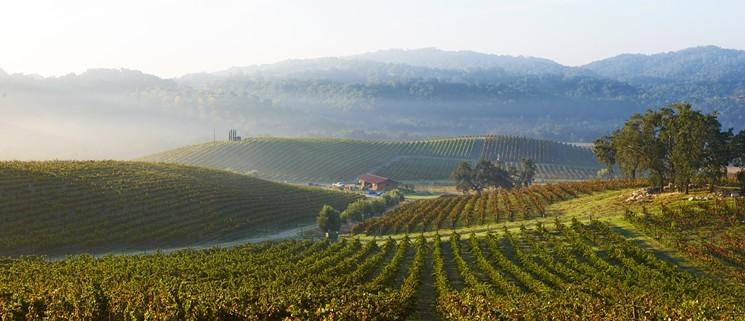 Wineyard Credit Tablas Creek